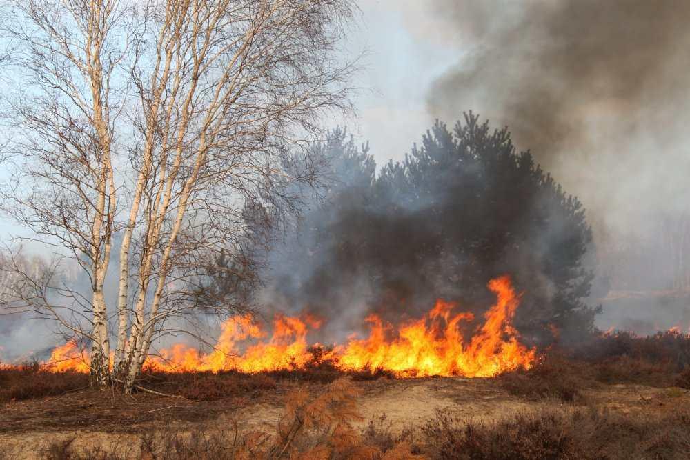 Wenn der Wald brennt - Feuerloeschpanzer.de