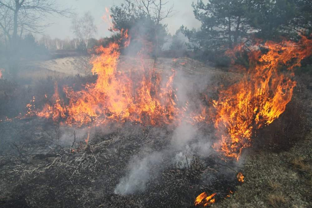 Der Wald brennt? Feuerloeschpanzer.de
